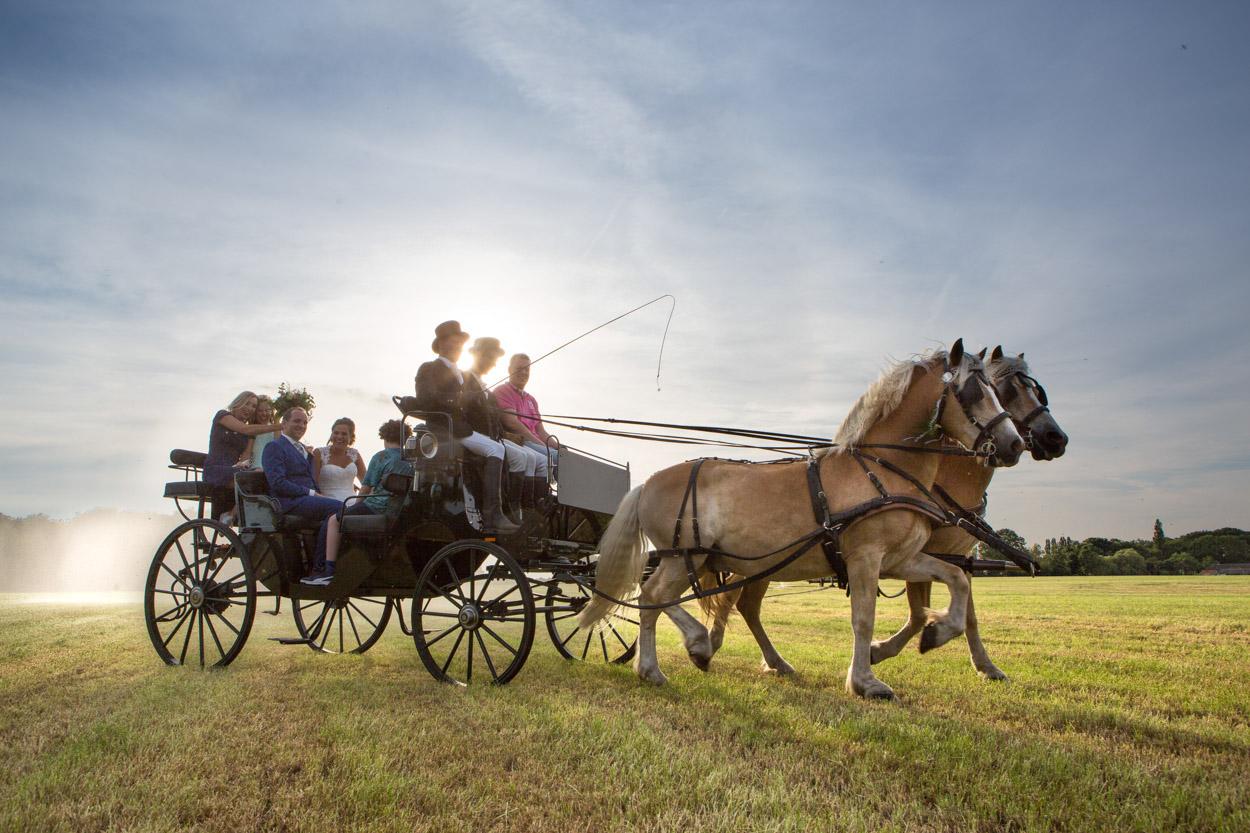 Paard en wagen, trouwfoto.